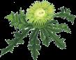 N.U. Agrar Logo